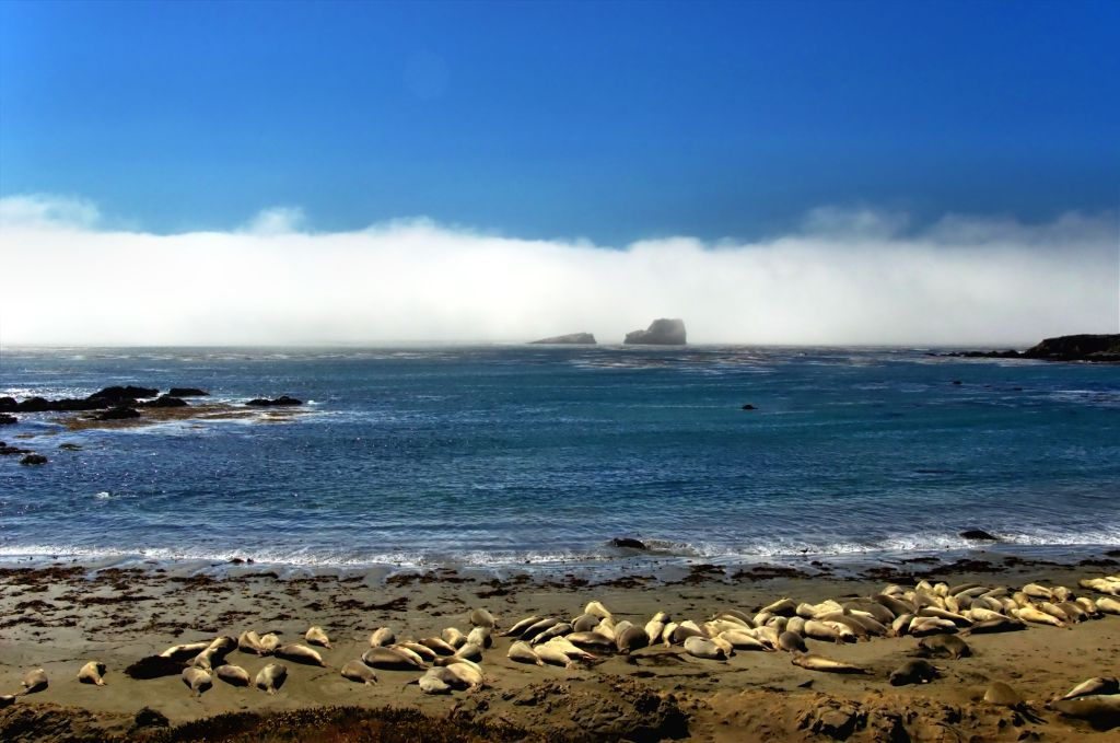 best stops along the pacific coast highway - sea lions