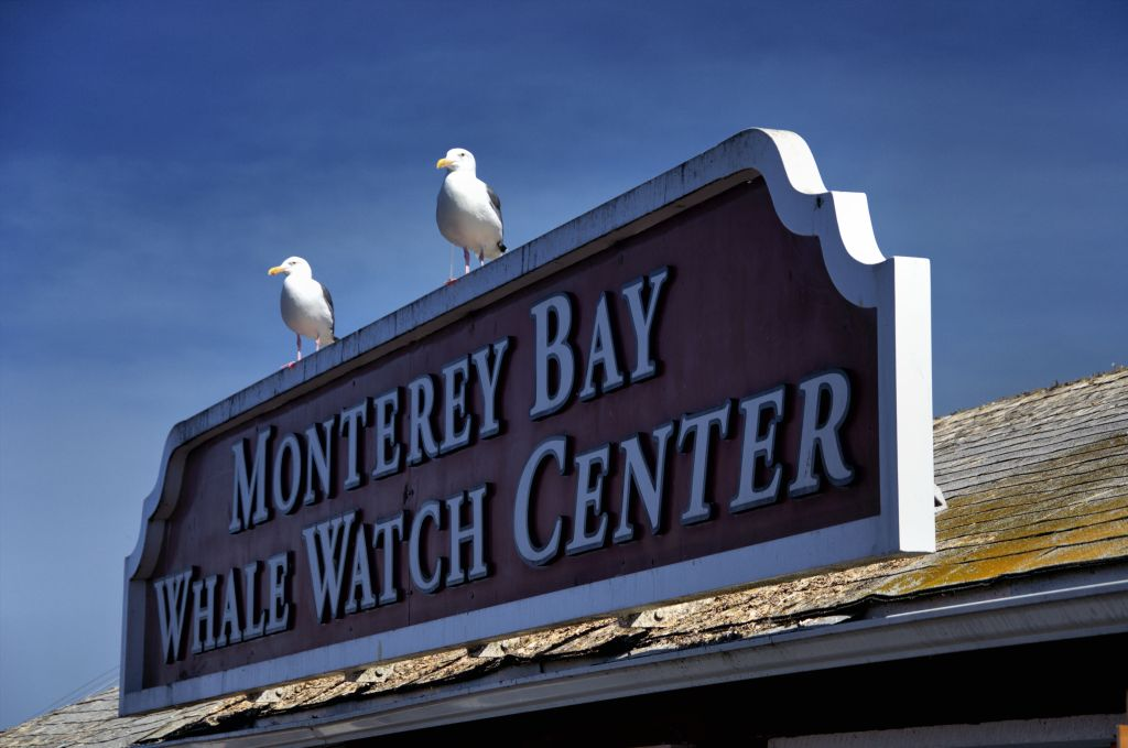 best stops along the pacific coast highway - monterey