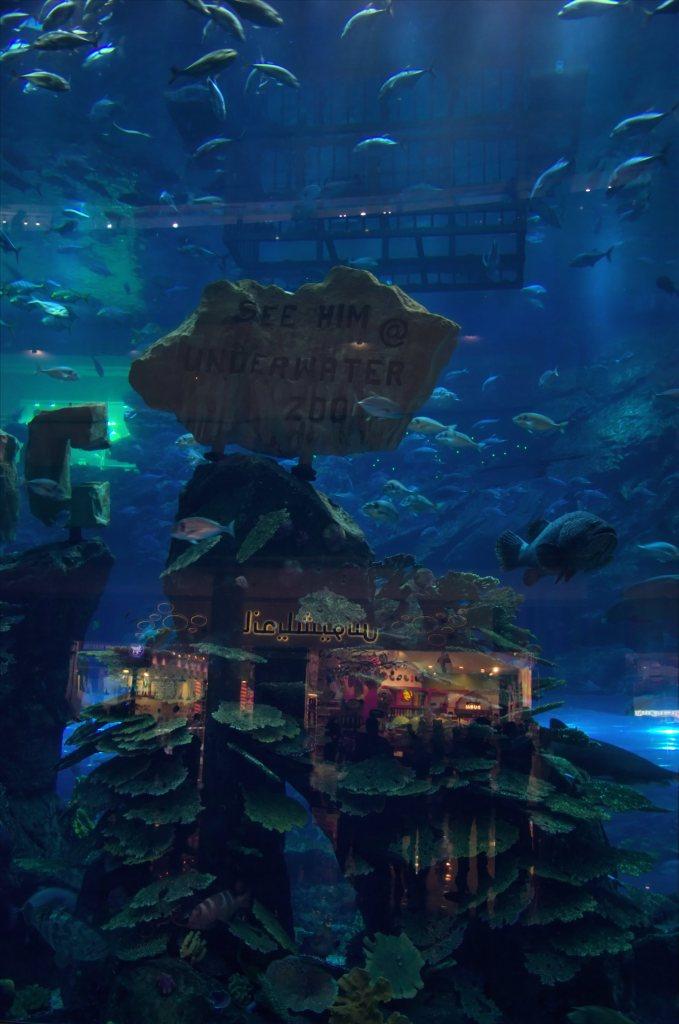 co warto zobaczyć w Dubaju - atrakcje Dubaju - wakacje w Dubaju - Dubai Mall akwarium