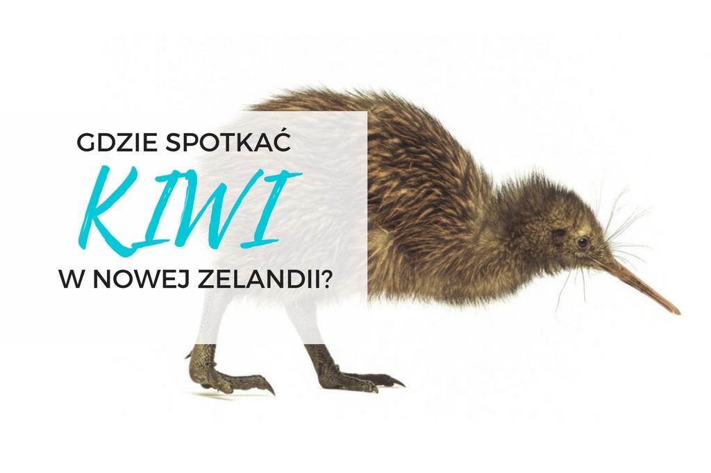 ptak kiwi nowa zelandia