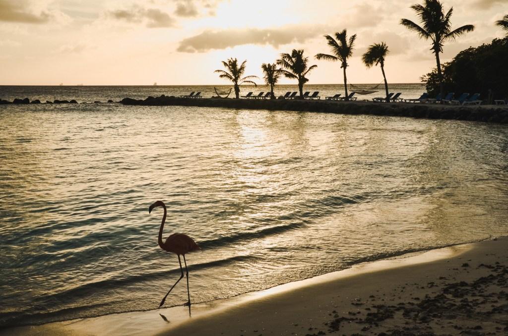 flamingo beach aruba renaissance island - sunset