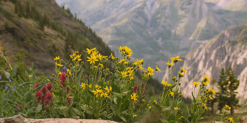 Where to Find Wildflowers in Telluride