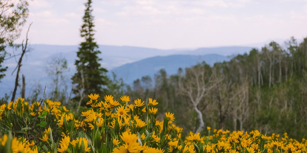 5 Steamboat Springs Summer Activities You Don't Want To Miss