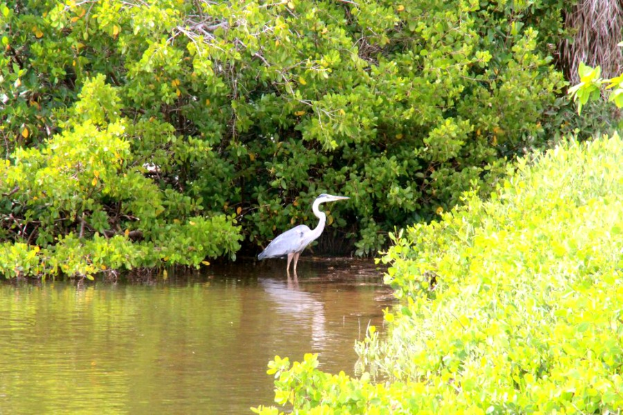Fort Myers Tipps, Sanibel