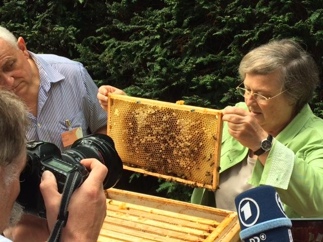 Bienen am Bundestag