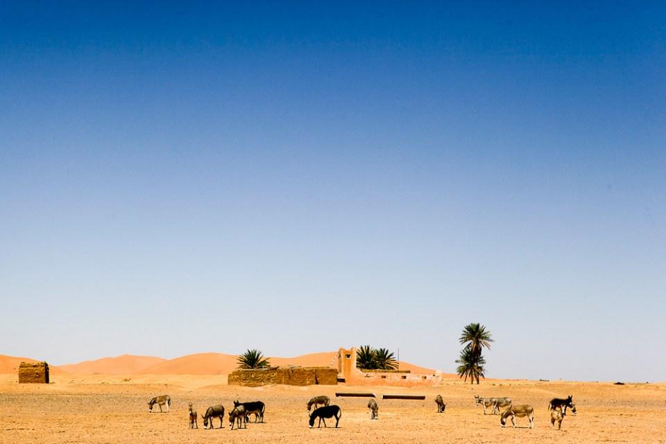 201505_MoroccoFossilHunting-0423