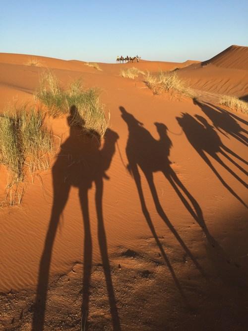 201505_morocco_camel-3286