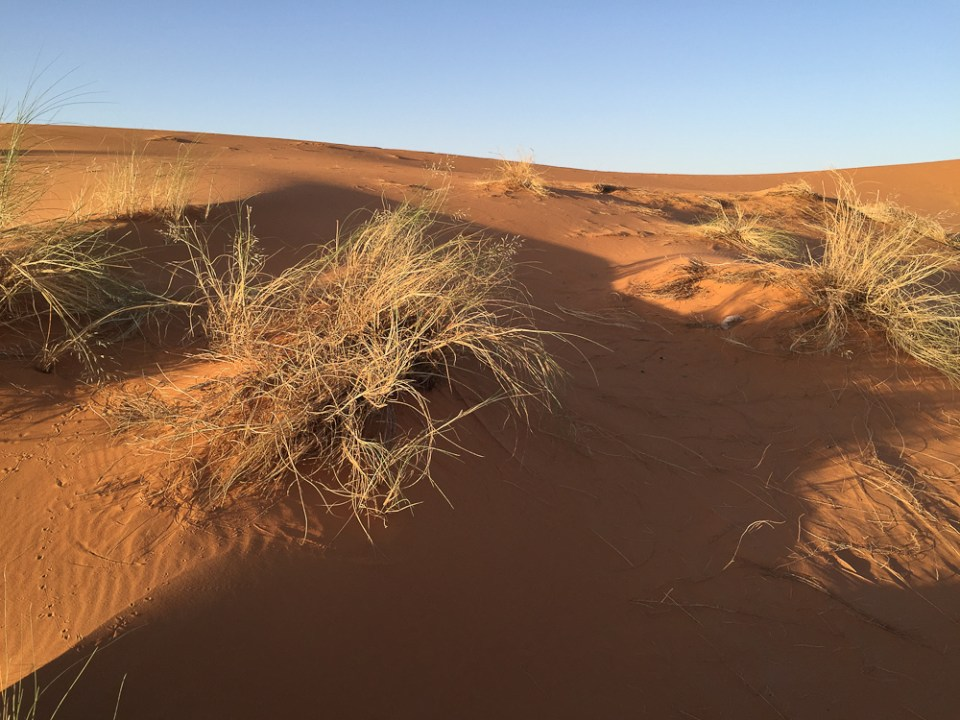 201505_morocco_camel-3287