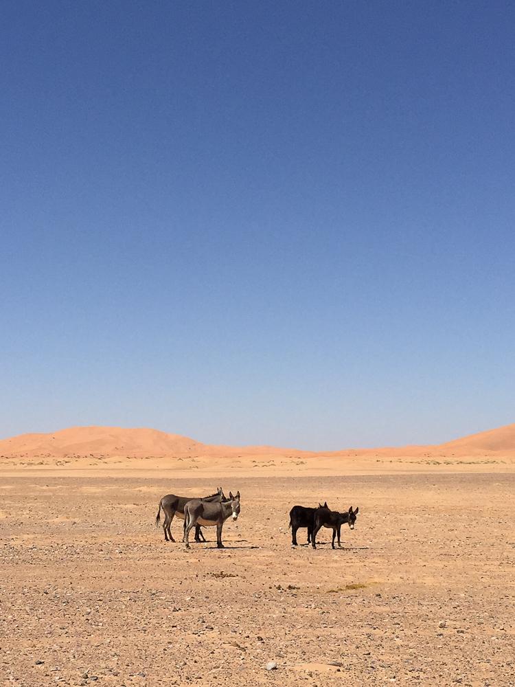 201505_Morocco_iphone-3077
