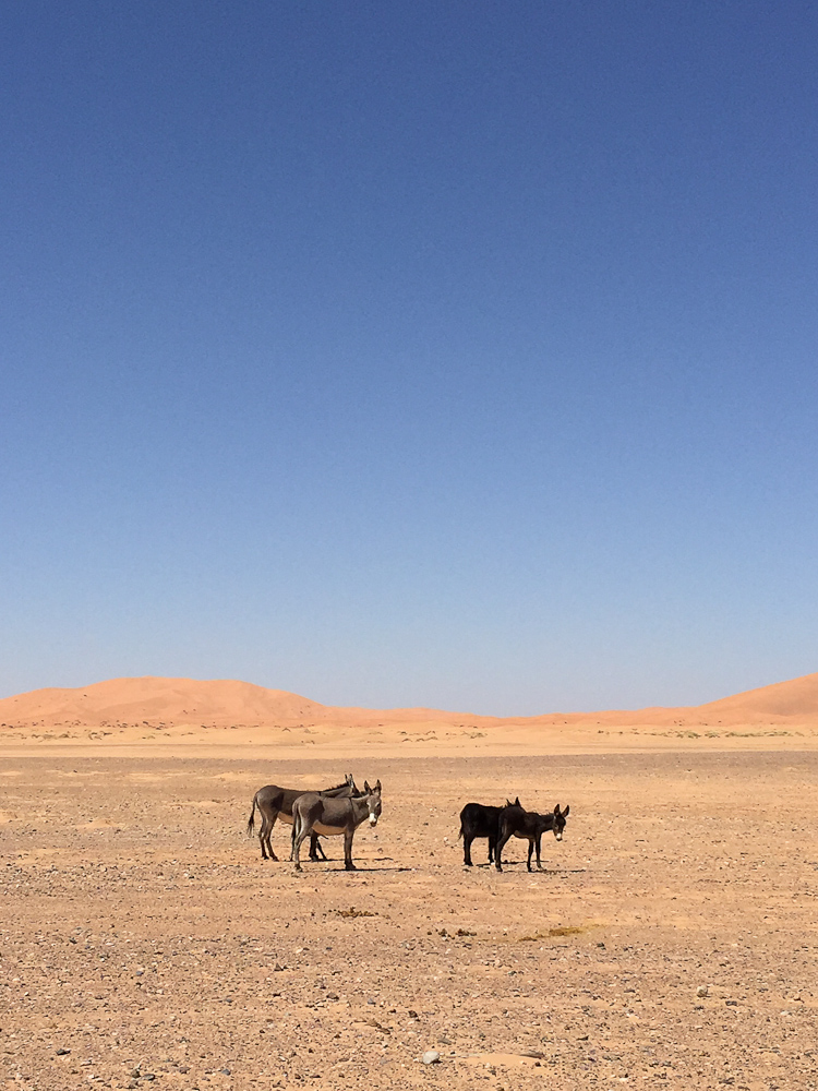 201505_Morocco_iphone-3077