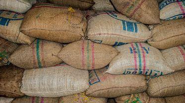Folly Coffee Bags