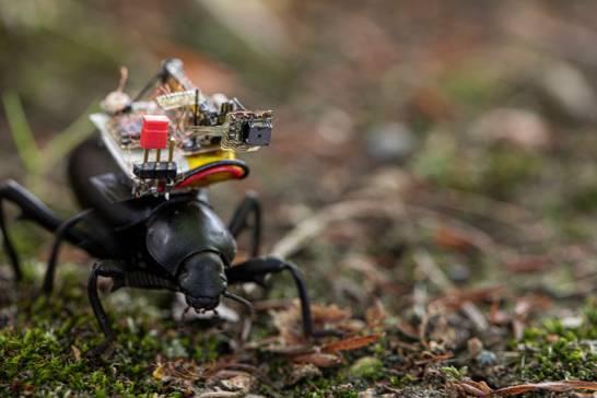 cámara insecto
