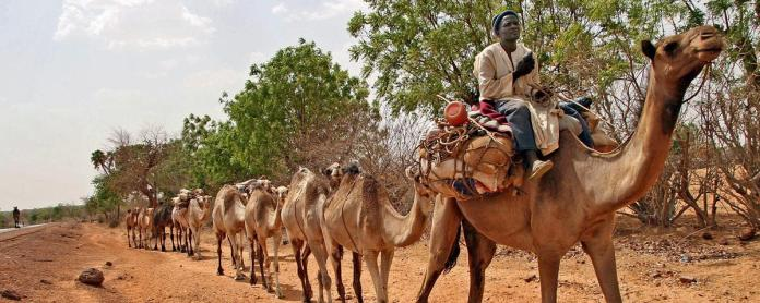 northern-nigeria-bans-travel-by-car-bicycle-donkey-and-camel-to-thwart-boko-haram-1443115017
