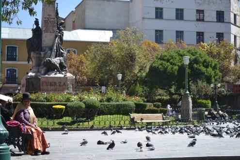 Pigeons, pigeons and pigeons.
