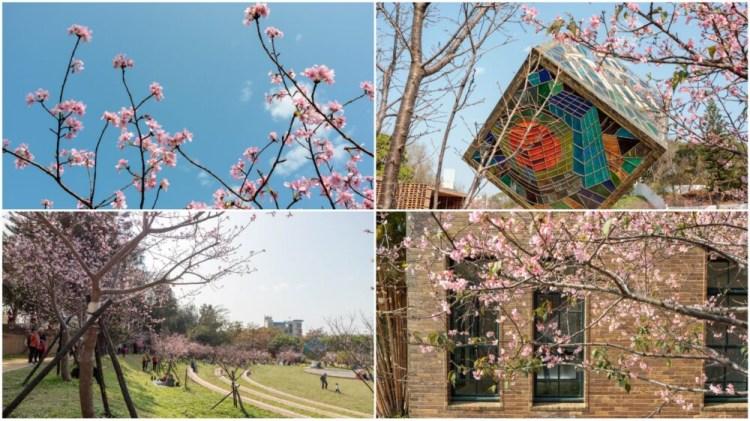 新竹東區景點「新竹公園櫻花盛開」城市賞櫻好去處!