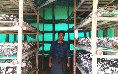 Cultivating mushrooms – making a stand against poverty in one of the poorest of villages in Myanmar