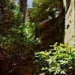 "da ""Intorno a una jungla progettata"""