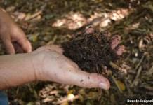 Curso gratuito de horta caseira está com inscrições abertas em São Pedro