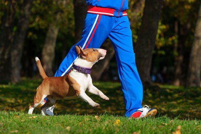 ANIMAIS DE ESTIMAÇÃO FAZ BEM A SAUDE 2 - Você Sabia que Ter Animais de Estimação Faz Bem à Saúde?