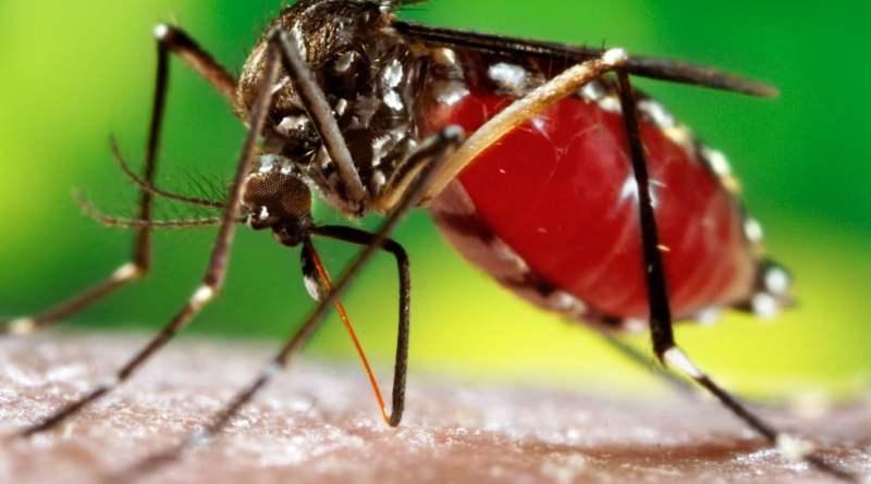 DENGUE - Prevenir a dengue: saiba como deixar o mosquito longe!