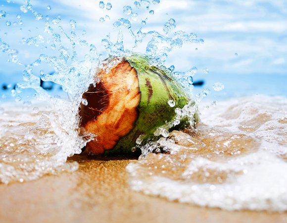ESCOLHER MELHOR COCO - Água de Coco: saiba quais são os benefícios e malefícios