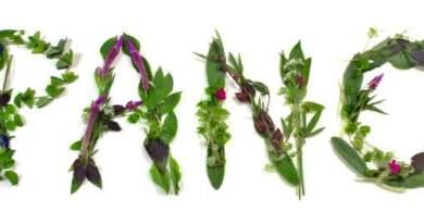 panc1 - Panc: Plantas Alimentícias Não Convencionais - PANC'S