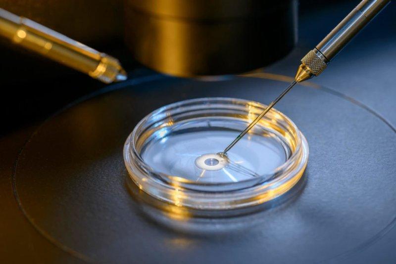 5 1 1024x683 - O que é fertilização in vitro? Por que a chance de ter gêmeos é maior?