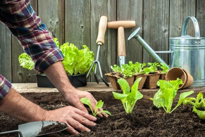 Fonte da Saude Curso Online de Producao de Alimentos Organicos de qualidade - Curso Online de Produção de Alimentos Orgânicos
