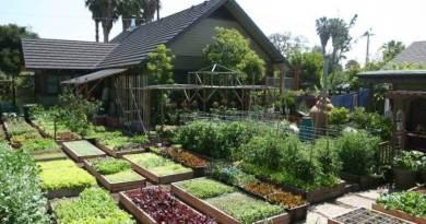 Fonte da Saude - Curso Online de Producao de Alimentos Organicos