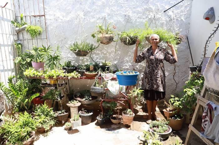 Programa busca implantar jardins florestais e hortas em residências de alunos de escolas de Juazeiro do Norte