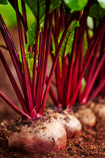 beets in a row