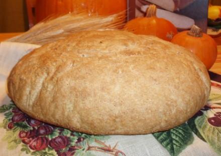 Горькие факты о современном хлебе