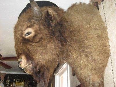Buffalo Bill's head