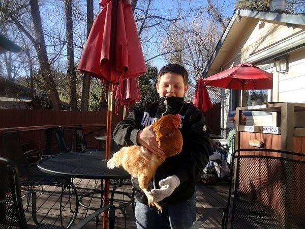 friendly-chicken