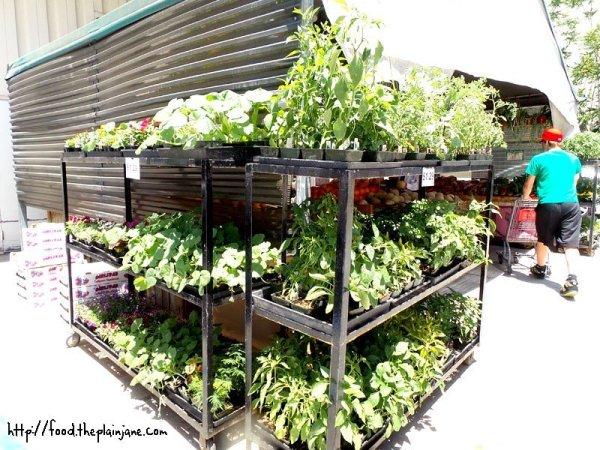 more-herbs