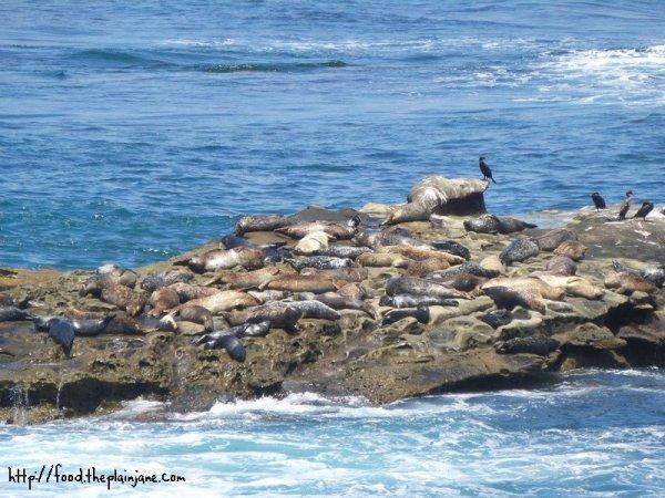 seal-rock