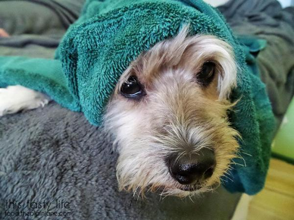 maya-towel-dog-1