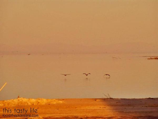 birds-low-over-salton-sea
