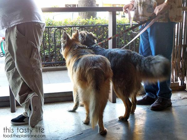 Dog friendly bar - Culture Brewing Co in Ocean Beach