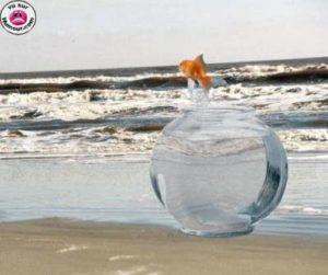 poisson sautant hors de son bocal vers la mer
