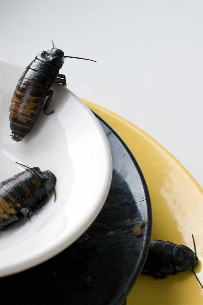 Roaches In Kitchen Sink | Dandk Organizer