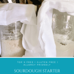 Sourdough Bread Starter | Whole Wheat | All-Purpose Flour | Gluten Free Flour Recipe How To Tips and Tricks