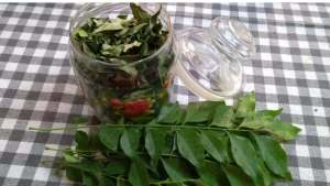 how to preserve curry leaves 3