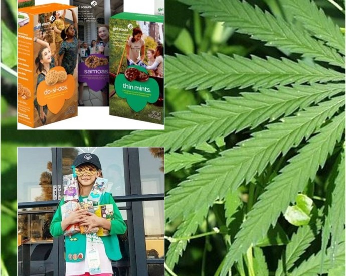 Girl Scout sells 312 boxes of cookies in six hours outside pot dispensary