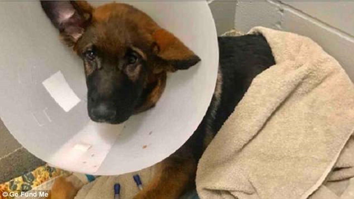Man Raises $14,000 For Puppy's Medical Bills Then Pockets The Money And KILLS The Dog