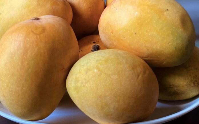 Goan Mangoes