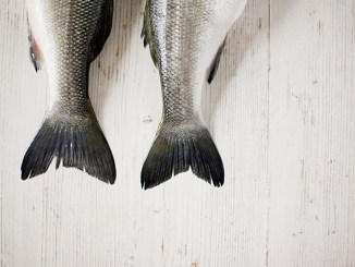 The tails of two fish side by side