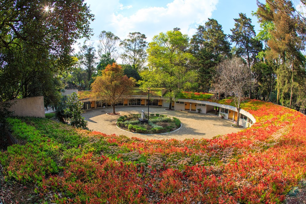 Los 7+1 jardines secretos en la CDMX que jamás imaginaste que existían (y puedes visitarlos)