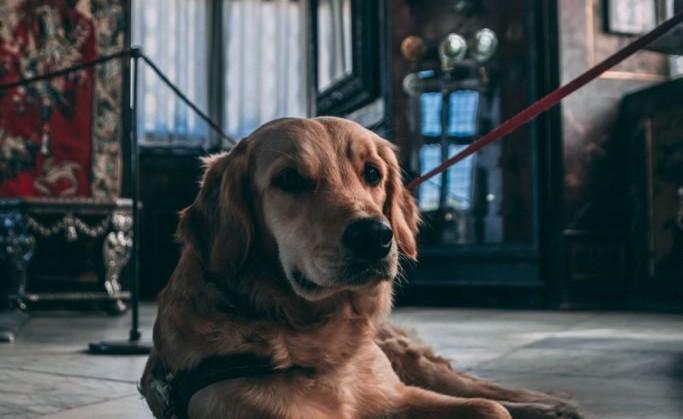 #ARTEYPERROS, el nuevo programa del Tamayo para ir al museo con tu perro