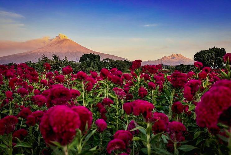 En estos campos de flores en México podrás tomarte las fotos más espectaculares